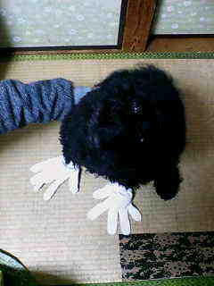 畳の張り替えは、ぽん太が。。。_e0083143_0255740.jpg