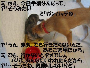 b0054391_4544482.jpg