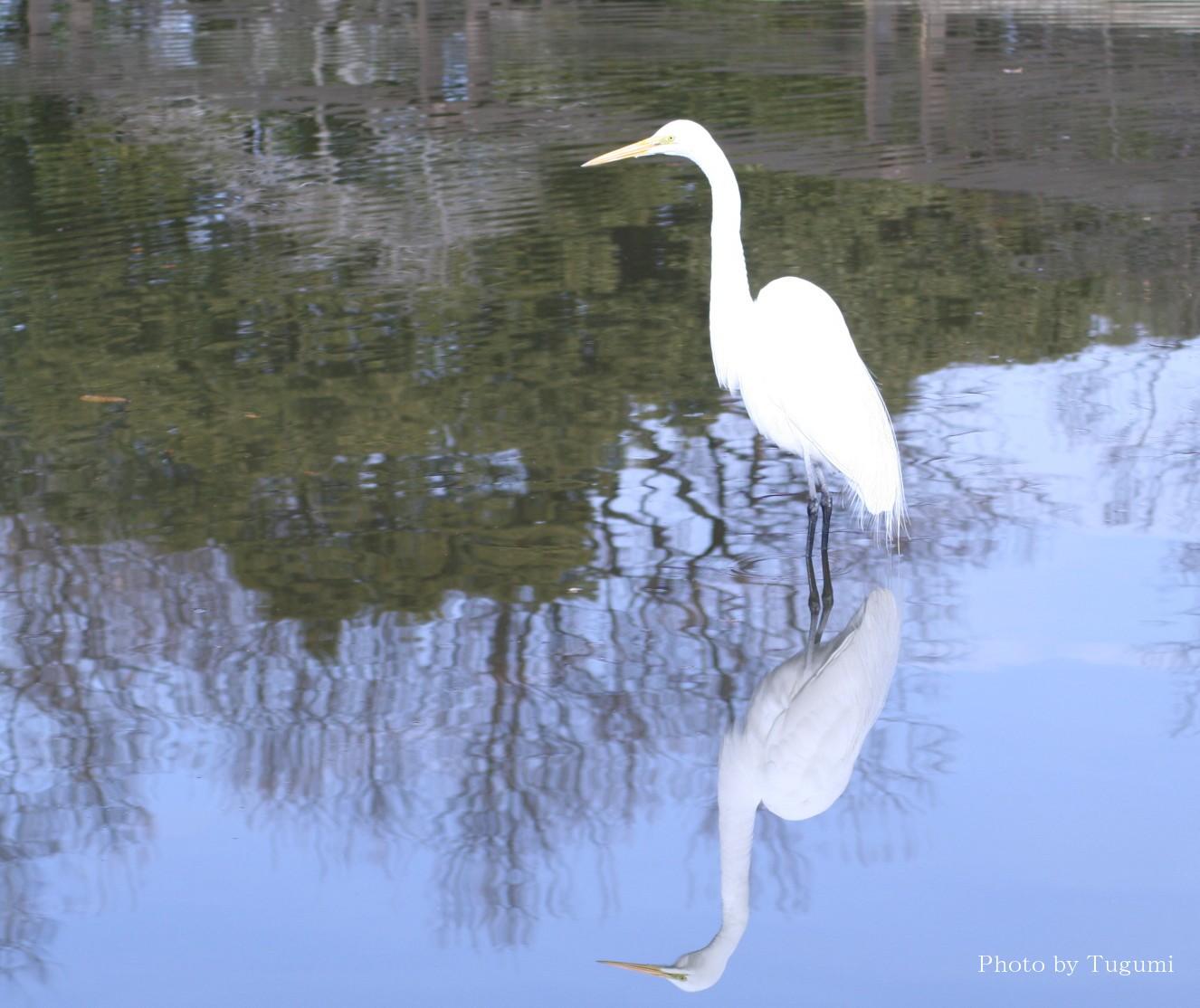 白鷺(ダイサギ)を観る_f0037633_2061735.jpg