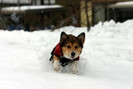 雪楽し 遊ぶを見るも また愉し_b0031538_14241154.jpg