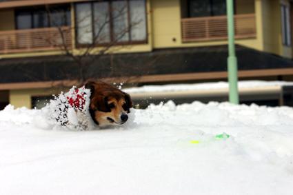 雪楽し 遊ぶを見るも また愉し_b0031538_14253869.jpg