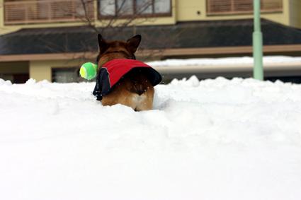 雪楽し 遊ぶを見るも また愉し_b0031538_14272423.jpg