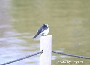 水辺の小鳥_f0037633_19201871.jpg