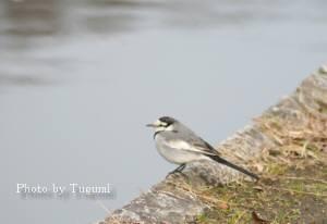 水辺の小鳥_f0037633_19205393.jpg
