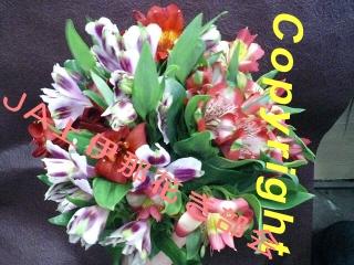 アルストロメリアの花束_d0062298_1693938.jpg