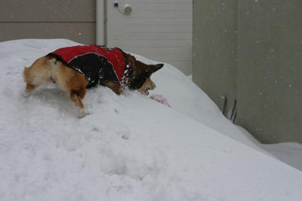 冷凍庫 ごとき寒さも いと涼し _b0031538_19124613.jpg