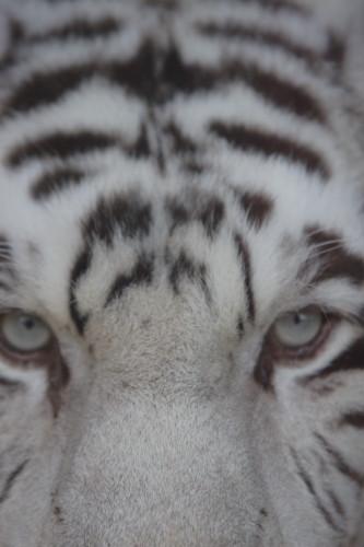 タイガーマスク (゚д゚)(。_。)ウン!_f0031022_2125131.jpg