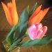 植物の生命力・ミドリイロの魅力_f0008555_053257.jpg