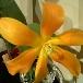 植物の生命力・ミドリイロの魅力_f0008555_0533932.jpg
