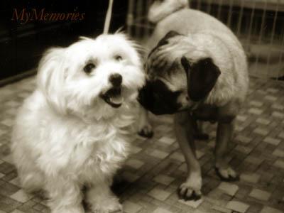 Mimi&Pooh