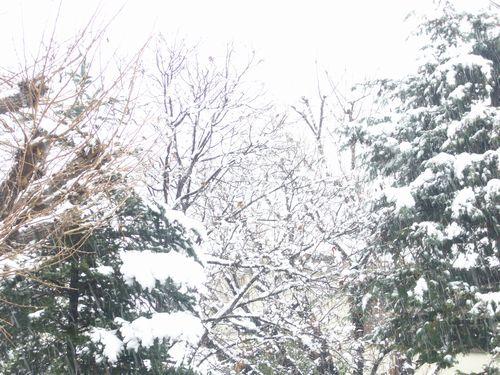 16区のガレット・デ・ロワ。。。雪の日の贈り物_a0053662_172660.jpg