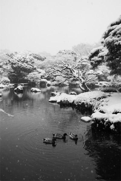 旧古河庭園 ver.WT_a0058669_15435271.jpg