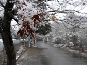 今日は雪_a0027275_1719305.jpg