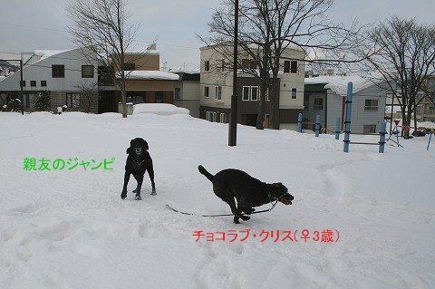 クリスちゃん_c0048117_22584623.jpg