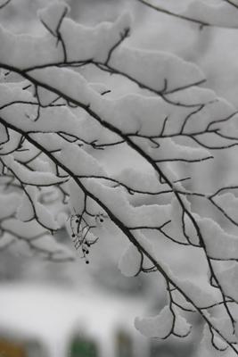 はじめての雪_f0031022_2235257.jpg