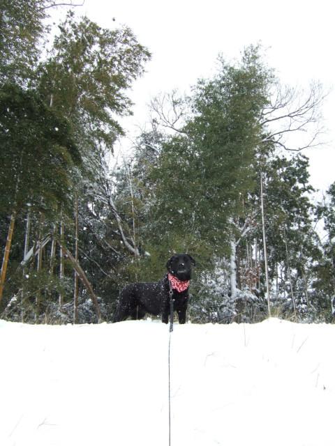 雪が降っても1日の長さは一緒_c0039145_20403518.jpg