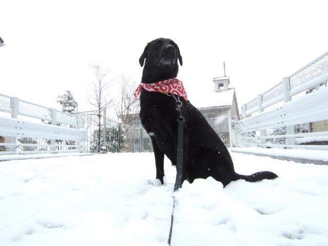 雪が降っても1日の長さは一緒_c0039145_20494918.jpg