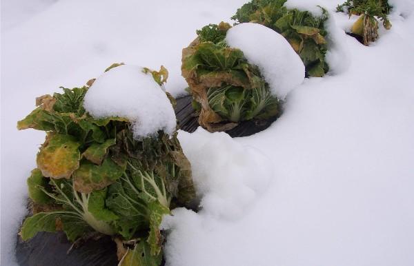 神奈川も雪でした_c0053863_170257.jpg