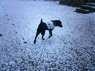 雪!_b0069484_19335322.jpg