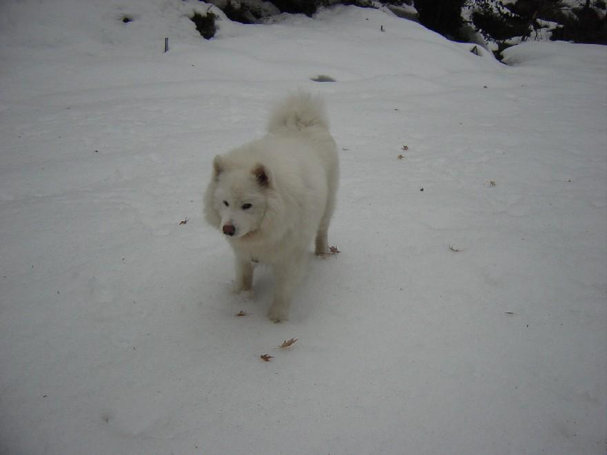 雪見旅_a0049296_15273855.jpg