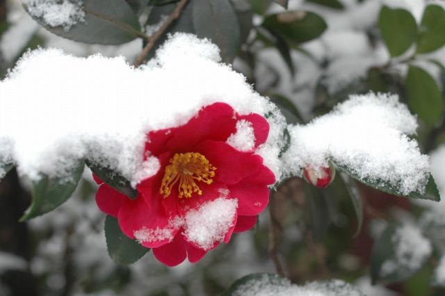 東京初雪_f0050534_2019551.jpg