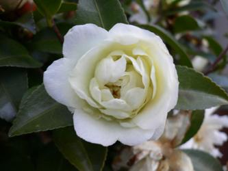白い花 06-1_c0069048_6491617.jpg
