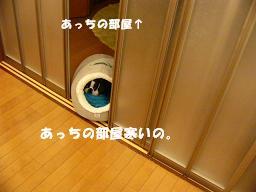 d0041575_17491984.jpg