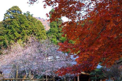 秋の額縁庭園_e0051888_10122517.jpg