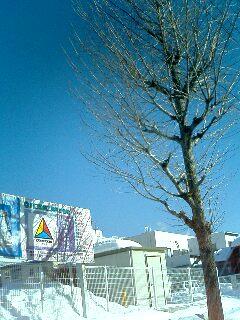 青空に子供達の歓声_e0012815_2154217.jpg
