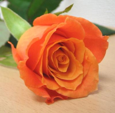 バラ サリ オレンジ