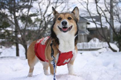 雪遊び セーブするのも 保護のうち_b0031538_15273449.jpg
