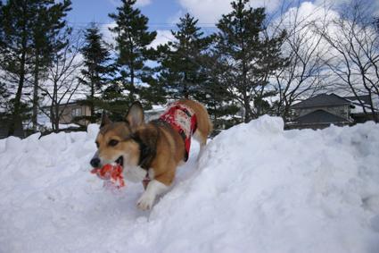 雪遊び セーブするのも 保護のうち_b0031538_1530057.jpg