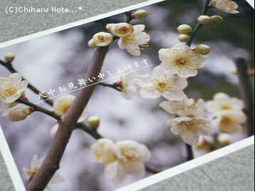 c0046340_20122476.jpg