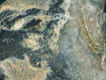 自然石クラブ: 海底の記憶_f0041351_082679.jpg