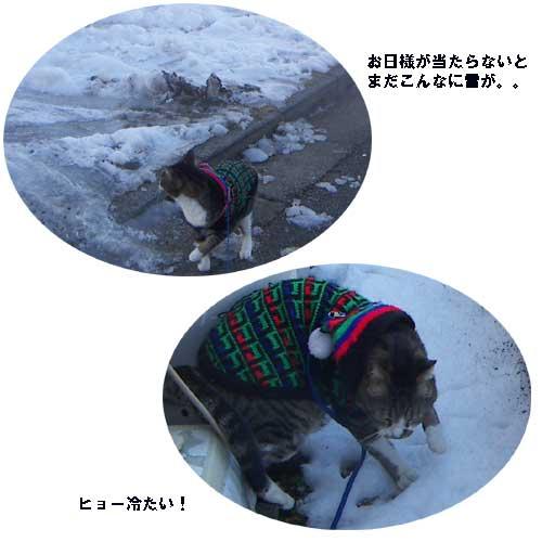 クリン毛の帽子    1月27日  fri_e0018604_12515726.jpg