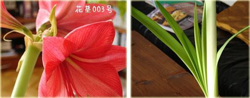 a0034198_20123439.jpg