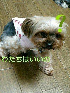 f0040805_11185757.jpg