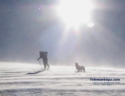 テレマークと犬は原始的だ_d0052419_048853.jpg