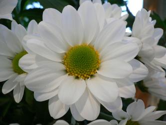 白い花  06-2_c0069048_6371779.jpg