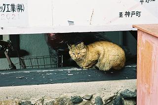 名鉄揖斐線黒野駅前での1コマ_e0040714_2055414.jpg