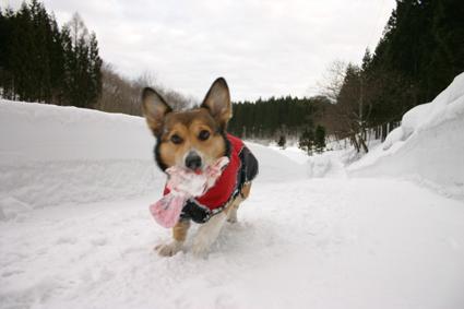 雪の壁 登ってズルリ コントなり_b0031538_20512868.jpg