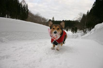 雪の壁 登ってズルリ コントなり_b0031538_20564937.jpg