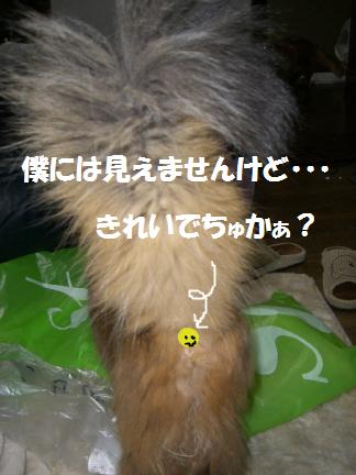 c0065841_036310.jpg