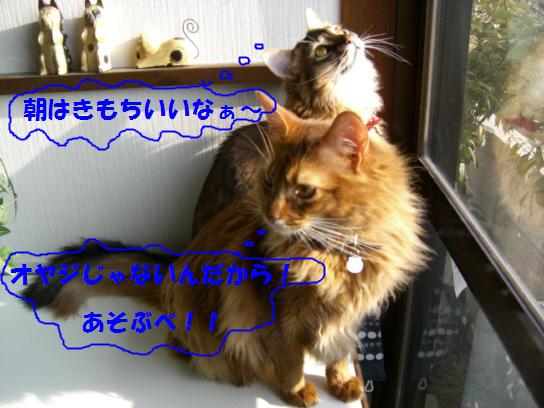 c0065841_1121791.jpg