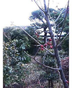 1月29日(日) ちいさい春みつけた_e0006772_1751541.jpg