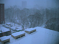 今朝も雪_c0002682_7304250.jpg