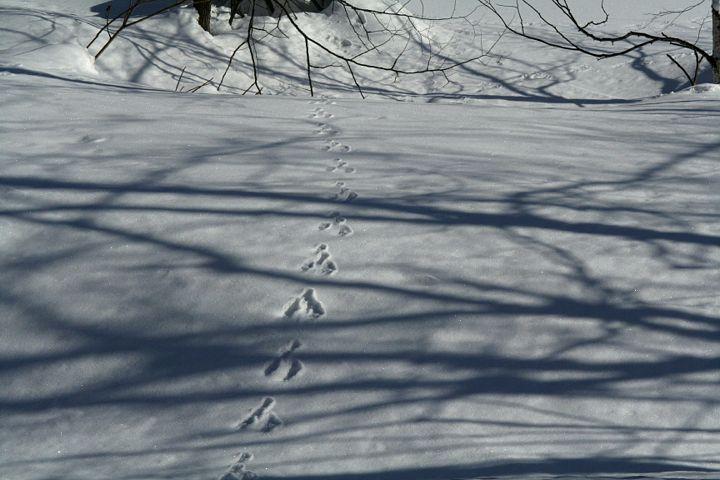 雪模様_d0012134_011721.jpg
