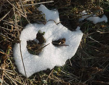 残雪 カマキリ卵_c0002682_1252649.jpg