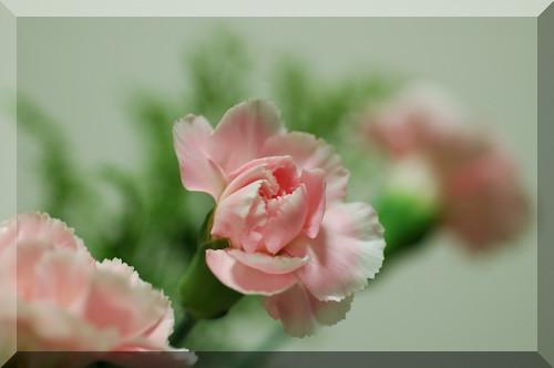 寒桜_f0053272_21142847.jpg
