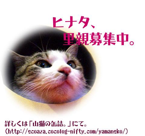 a0060915_23295025.jpg
